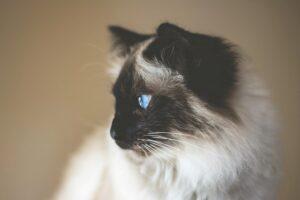 tumori mammari del gatto Foto di Ivan Jevtic on Unsplash