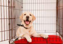 kennel per educare il cane