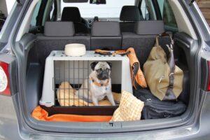 kennel per educare il cane auto