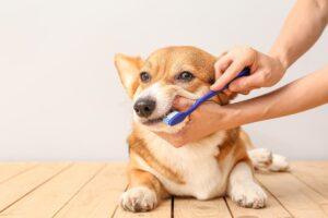 malattie dentali nei cani spazzolare
