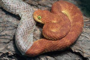 muta nei rettili serpente