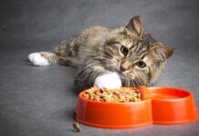 pigrizia dei gatti cibo