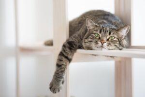 pigrizia dei gatti in casa