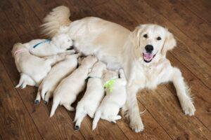 selenio negli animali domestici Fertilità