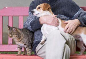 selenio negli animali domestici vecchiaia