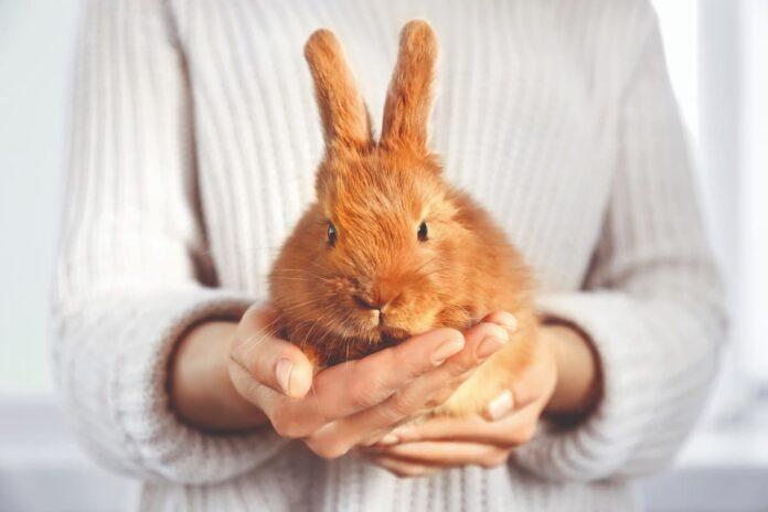 zampe del coniglio 1