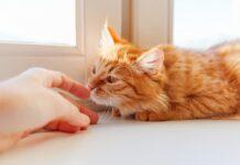 Quali odori sente il gatto