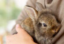 muta nel coniglio