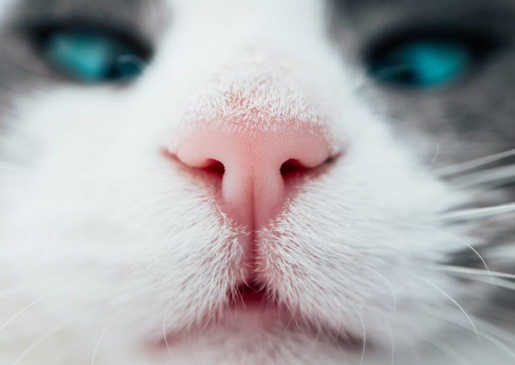 odori sente il gatto naso