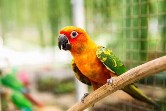 proventricolite infettiva dei pappagalli