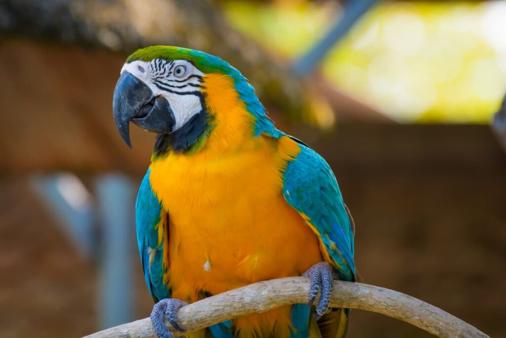 proventricolite infettiva dei pappagalli Ara (1)