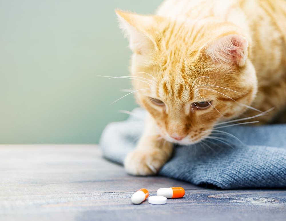 vitamine per cani e gatti
